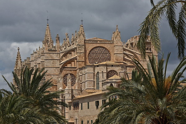 CATHEDRAL.PALMS